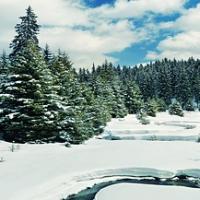 Зимна разходка в Родопите