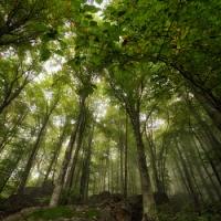 Есен в Централен Балкан