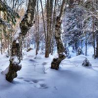 Витоша през зимата